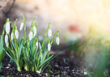 April-arrangement